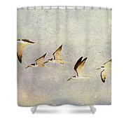 Black Skimmers On The Move Shower Curtain