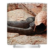 Black Snake Shower Curtain