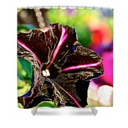 Black Spider Petunia Shower Curtain