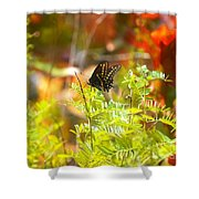 Black Swallow Tail Butterfly In Autumn Colors Shower Curtain