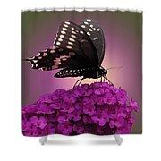 Black Swallowtail 1 Shower Curtain