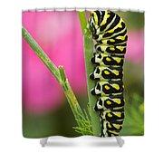 Black Swallowtail Caterpillar On Garden Shower Curtain