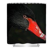 Black Swan Closeup Shower Curtain