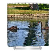 Black Swan's In Palm Springs Shower Curtain