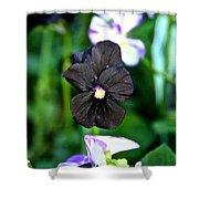 Black Violet Shower Curtain