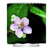Blackberry Bloom Shower Curtain