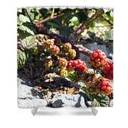 Blackberry On The Rock 02 Shower Curtain