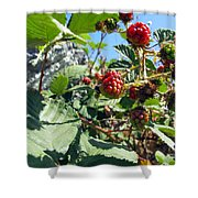 Blackberry On The Rock 03 Shower Curtain