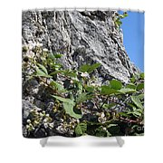 Blackberry On The Rock 04 Shower Curtain