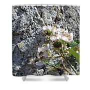 Blackberry On The Rock Square Format Shower Curtain