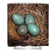 Blackbird Mums Eggs Shower Curtain