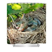 Blackbird Nest Shower Curtain