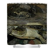 Blandings Swimming Turtle Shower Curtain