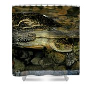 Blandings Turtle Shower Curtain