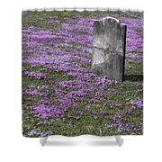 Blank Colonial Tombstone Amidst Graveyard Phlox Shower Curtain by John Stephens
