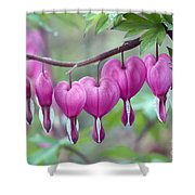 Bleeding Heart Shower Curtain by Gail Jankus and Photo Researchers