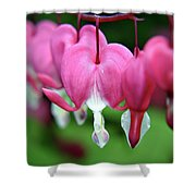 Bleeding Hearts Dicentra Shower Curtain