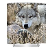 Blending Wolf  Shower Curtain