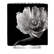 Blind Prickly Pear Cactus In Black And White Shower Curtain