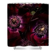 Blood Red Anemones Shower Curtain