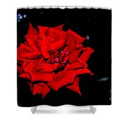 Blood Rose Shower Curtain