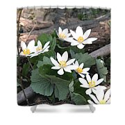 Bloodroot Shower Curtain