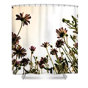 Blooming Above 2 Shower Curtain