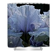 Blooming Iris Shower Curtain