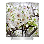 Blooming Ornamental Tree Shower Curtain