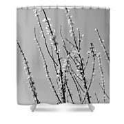 Blooming Twigs Shower Curtain