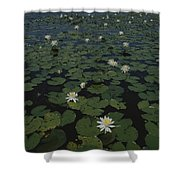 Blooming Water Lilies Fill A Body Shower Curtain