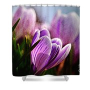 Blossom By Blossom Shower Curtain