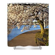 Blossoming Cherry Trees Shower Curtain