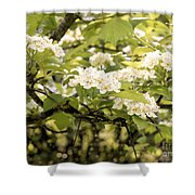 Blossoming Hawthorn Tree Shower Curtain