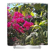 Blossoms And Breadfruit Shower Curtain