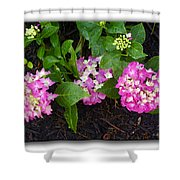 Blossoms And Rain Drops Shower Curtain