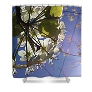 Blossoms In Bloom Shower Curtain by Katie Cupcakes