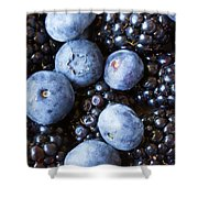 Blue And Black Berries Shower Curtain