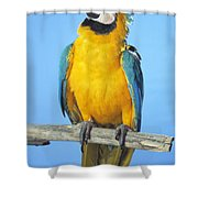 Blue-and-gold Macaw Shower Curtain