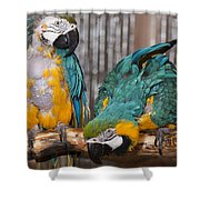 Blue And Gold Macaw Pair Shower Curtain