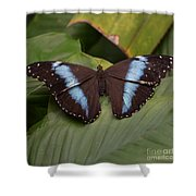 Blue Banded Morpho Shower Curtain