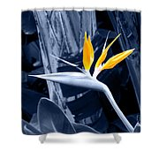 Blue Bird Of Paradise Shower Curtain