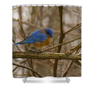 Blue Bird Perched On Willow Shower Curtain