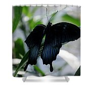 Blue-black Butterfly Shower Curtain