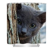 Russian Blue,cat  Shower Curtain