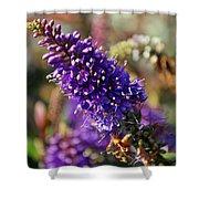 Blue Brush Bloom Shower Curtain