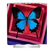 Blue Butterfly In Pink Box Shower Curtain