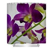 Blue Charm X Aridang Blue Orchid - 3 Shower Curtain