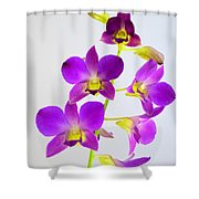 Blue Charm X Aridang Blue Orchid - 1 Shower Curtain