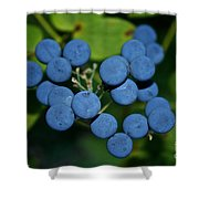 Blue Cohosh Shower Curtain